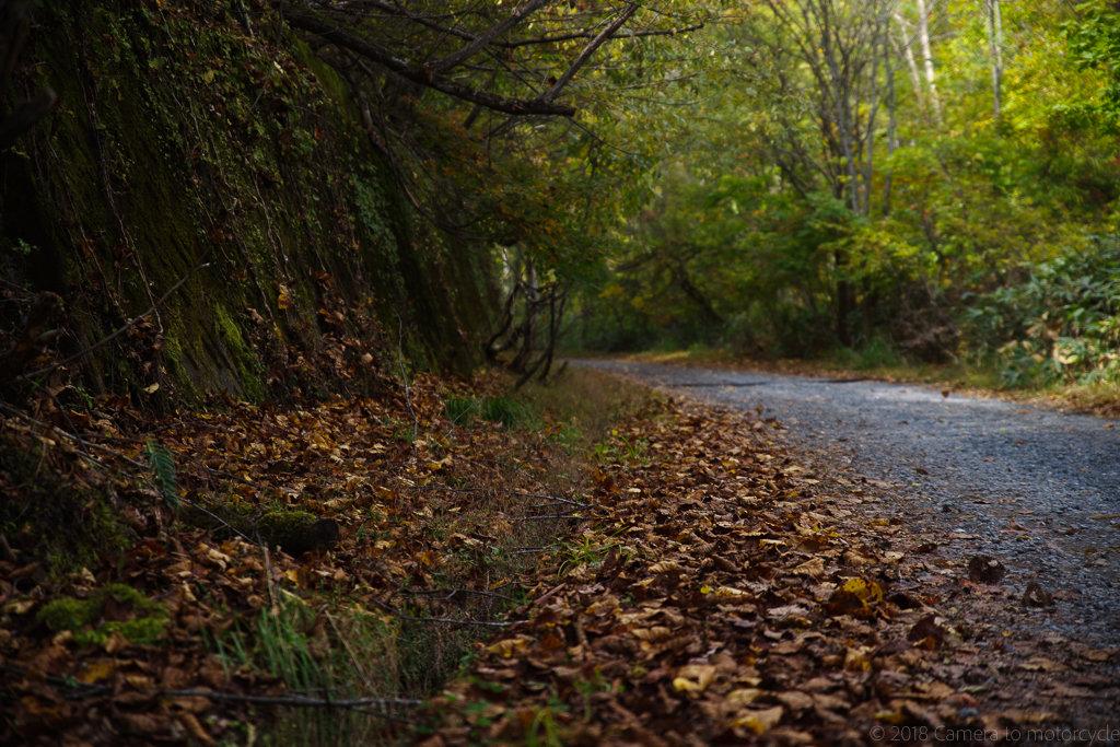 尾瀬の登山道